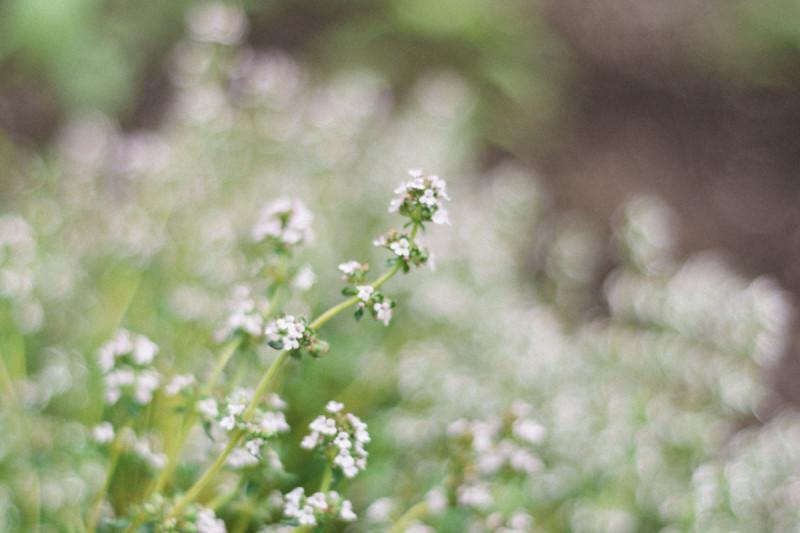 toronto-garden-photography-12